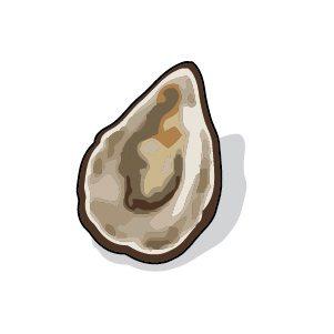 Coquilles d'huîtres ou de moules